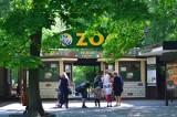 Problemy z dojazdem do Nowego Zoo w Poznaniu! Zamknięto fragment ulicy Krańcowej dla ruchu samochodowego