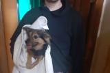 Pies szczekał bez przerwy. Strażnicy miejscy w mieszkaniu w Kielcach zastali koszmarny widok [ZDJĘCIA]