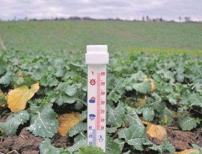 Pogoda nie służy roślinom i rolnikom