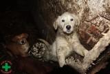 Zwierzęta z pseudohodowli ze Starego Czarnowa pod opieką lekarzy w całej Polsce. Wygłodzone psy żeby przeżyć zjadały padlinę