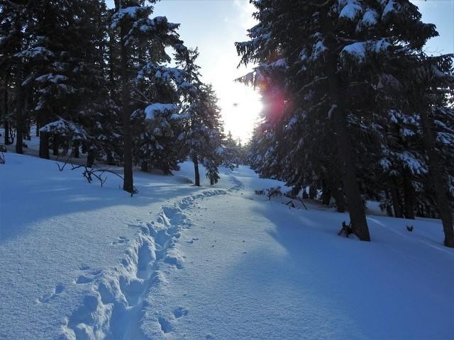 Choć we Wrocławiu temperatura przekroczyła 5 stopni na plusie i o prawdziwej, śnieżnej zimie nie ma mowy, w Sudetach nastroje zgoła odmienne. Po ostatnich dniach odwilżowych, gdzie śnieg znikał już nawet ze szczytu Śnieżki, teraz sypnęło białym puchem. Przybyło mniej więcej ok. 10 cm śniegu (a w Jakuszycach nawet 15 cm) i przy pięknej, słonecznej pogodzie, zrobiło się naprawdę bajkowo. Zobaczcie na kolejnych slajdach jak to wygląda w największych sudeckich ośrodkach. PRZEJDŹCIE DO ZDJĘĆ PRZY POMOCY STRZAŁEK LUB GESTÓW NA TELEFONIE KOMÓRKOWYM