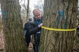 Poznań: Sprawdzano drzewa w związku z budową basenu w parku Kasprowicza. Na jaw wyszły błędy [ZDJĘCIA]