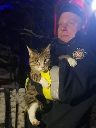Strażacy z Dretynia i Miastka ratowali dzisiaj (16.01.2021) kota, który wdrapał się wysoko na drzewo i nie potrafił z niego zejść. W ruch poszły strażackie drabiny. I kota z Dretynia bezpiecznie udało się sprowadzić na ziemię.