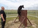 Najlepsze policyjne psy jadą na mistrzostwa Polski [ZDJĘCIA, WIDEO]