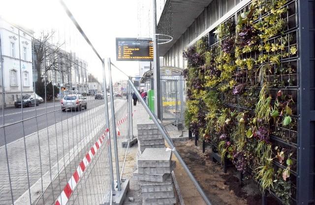 Tak powstają zielone przystanki autobusowe w Zielonej Górze.