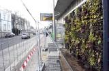 Na zielonych przystankach autobusowych w Zielonej Górze pojawiła się już roślinność. Jak oceniacie nietypowe wiaty w centrum miasta?