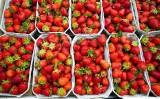 Dobre wieści dla klientów. Spadają ceny krajowych truskawek. Ile teraz kosztuje kilogram?