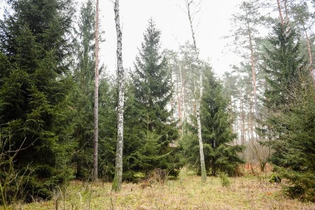 Lasy Państwowe o wizytach w lasach w czasie pandemii koronawirusa