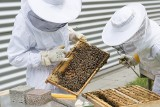 Wsparcie dla pszczelarzy. Wnioski można składać do 30 listopada 2017