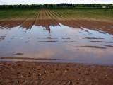Inwestycje na nawodnienia - nowy obszar w modernizacji gospodarstw rolnych 2019