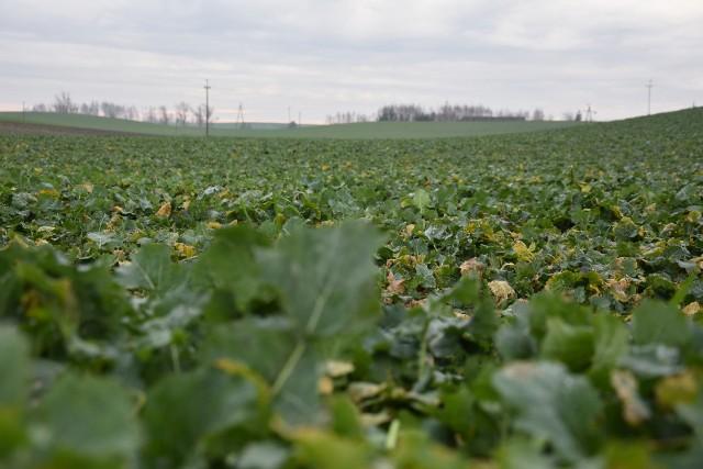 Rolnicy będą mogli złożyć wnioski wyłącznie w formie elektronicznej, za pośrednictwem aplikacji eWniosekPlus