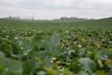 Wnioski o przyznanie płatności dla rolników - wyłącznie w formie elektronicznej, za pośrednictwem aplikacji eWniosekPlus