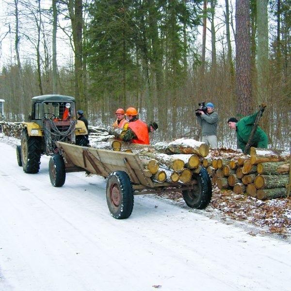 W środę i czwartek drzewo wwożono z powrotem do lasu