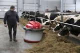 Rolnik karmi i doi krowy przez... telefon. Roboty coraz śmielej wkraczają do podlaskich obór