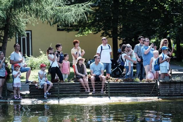 Najbardziej prawdopodobna data ponownego otwarcia zoo w Poznaniu to połowa lub końcówka czerwca.