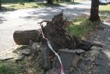 Burze w Łodzi. Po sierpniowych burzach w Łodzi na ulicach wciąż leżą gałęzie i fragmenty powalonych drzew