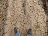 Zagrożenie suszą nie minęło. Sprawą zajmuje się specjalny minister