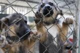 Pies to nie prezent. Schronisko w Białymstoku wstrzymuje adopcje psów przed świętami