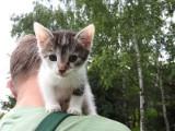 Te koty szukają domu. Możesz pomóc (ZDJĘCIA)