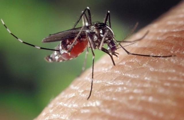 Wreszcie pogoda zaczęła nas rozpieszczać. Mamy prawdziwy powiew lata a wraz z nim letnie owady. Meszki i komary się uaktywniły. Jak sobie z nimi radzić? Sprawdźcie najlepsze sprawdzone sposoby na komary i ich ukąszenia. Sprawdźcie. >>>>>>