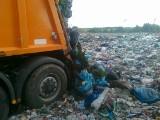 Odpady zielone trafiają na wysypisko, nie do kompostowników!