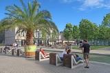 Palmy na Rynku w Katowicach i sztuczna Rawa przyciaga turystów. Śląskie Las Palmas świetnie wygląda
