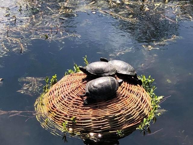 Wiosna w arboretum w Bolestraszycach. Galeria zdjęć.
