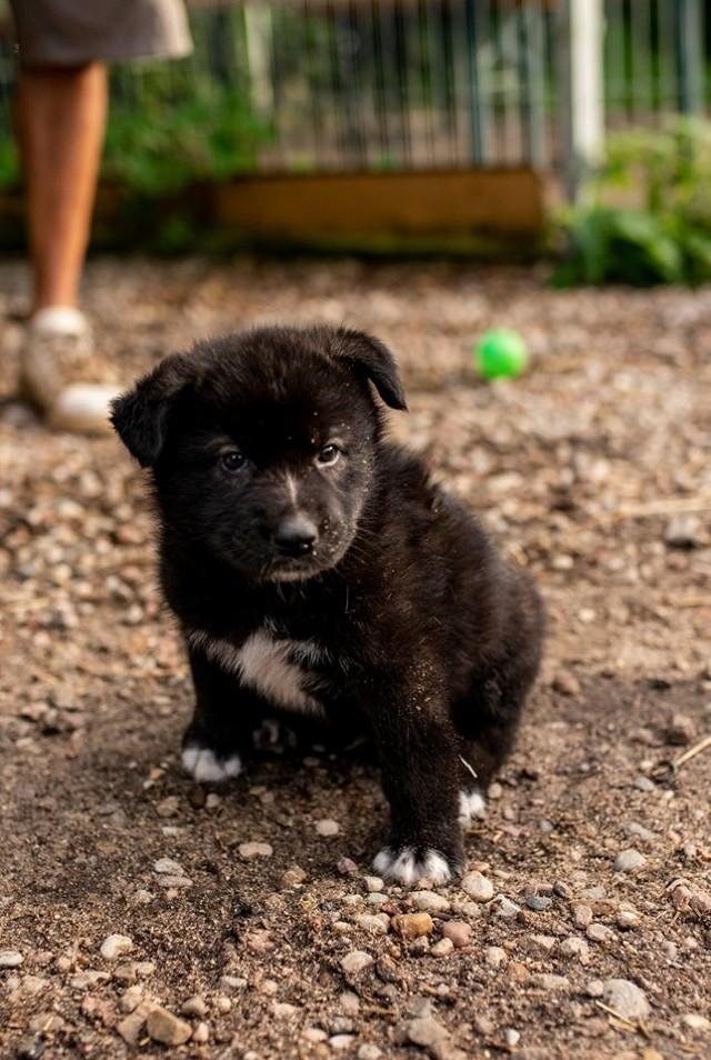 Bytowianka podrzuciła psa do azylu, bo sikał jej w domu.