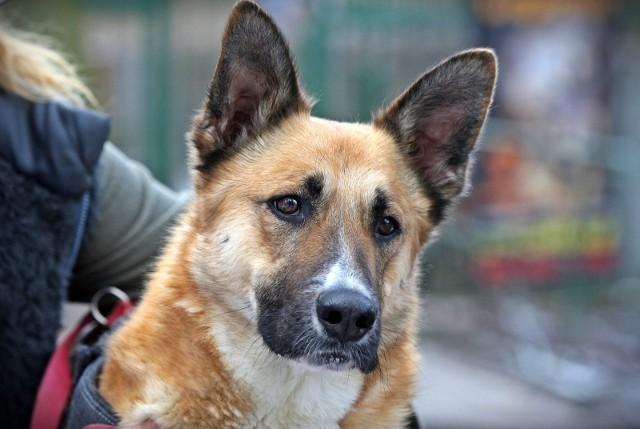 Pies Pralina trafił do Ciapkowa dwa lata temu