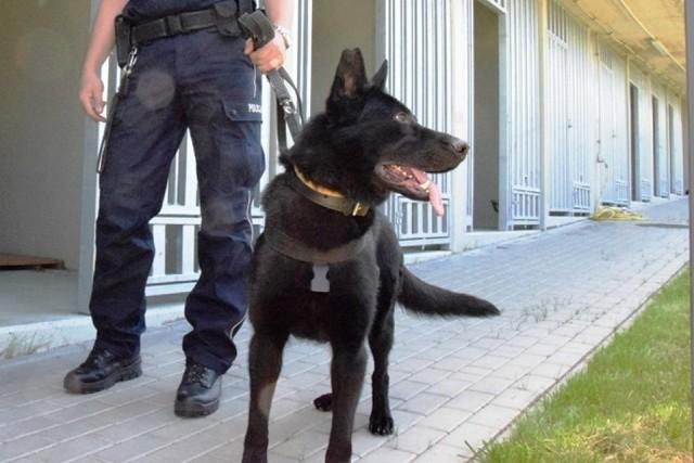 Policyjny pies tropiący bielskiego garnizonu