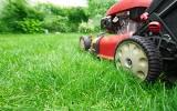 Co zrobić ze skoszoną trawą? Radzimy, jak ją wykorzystać do mulczowania, ściółkowania i nie tylko