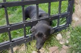 Strażacy uratowali psa, którego głowa ugrzęzła w ogrodzeniu [ZDJĘCIA]