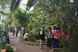 Łódzką Palmiarnię odwiedza coraz więcej osób. Dżungla pod szkłem