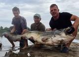 """Nasi """"Łowcy bestii"""" wyłowili z Wisły gigantyczne sumy. Największy miał ponad 2 metry!"""