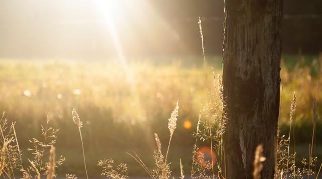 W ostatni poniedziałek tego lata dobra pogoda będzie nam dopisywać.Zobaczcie prognozę dla województwa śląskiego >>>
