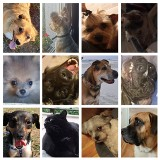 Dzień Praw Zwierząt. Galeria zdjęć zwierzaków czytelników Dziennika Łódzkiego