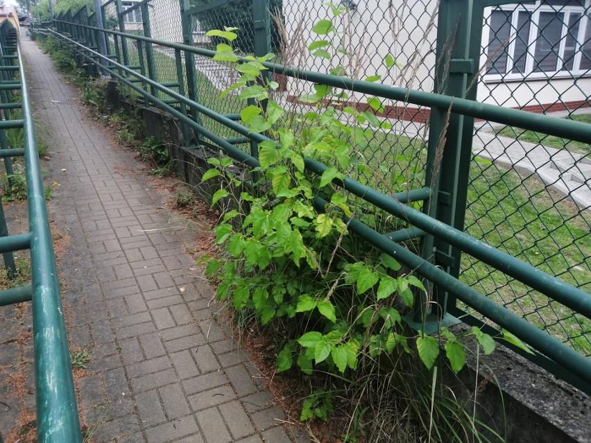 Mieszkańcy narzekają, że przejście od ulicy Dąbrowskiego do ulicy Staszica jest zaniedbane. Proszą o usunięcie chwastów i pomalowanie poręczy.
