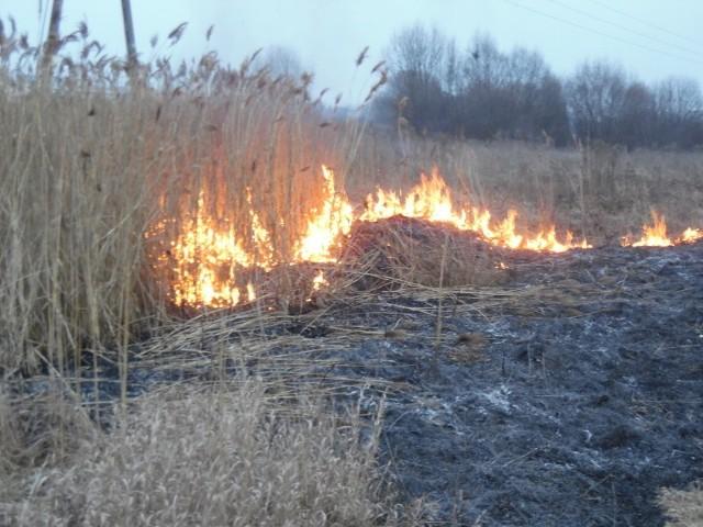 - Na szczęście nie było dużego wiatru, wtedy od ognia mogłaby się zająć dużo większa cześć łąki - opisał sytuację jeden ze strażaków. - Gdyby tak się stało pożar z lewej strony zatrzymała by rzeka, dalej jednak są m.in sklepy, a z prawej strony bloki, więc mogłoby być niebezpiecznie. Strażacy do gaszenia ognia użyli tłumic, czyli płaskich metalowych mioteł używanych przeważnie do tłumienia pożarów między innymi ściółki leśnej i traw.
