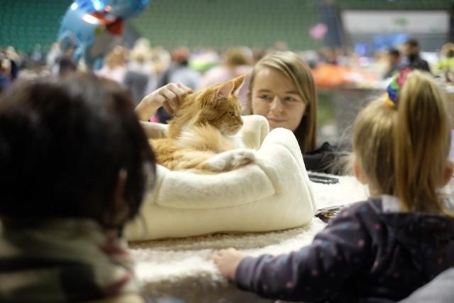 Międzynarodowa Wystawa Kotów Rasowych w Poznaniu 2015