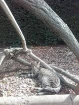 Kot z Ogrodu Botanicznego już odnaleziony!