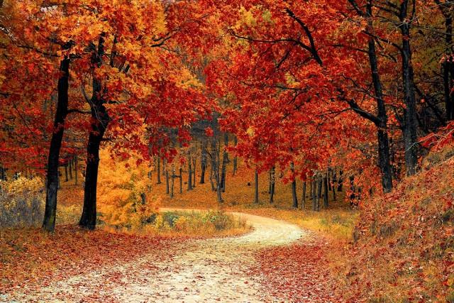 Pięć sobót, tyle samo niedziel i poniedziałków - taki będzie tegoroczny październik. Pod względem ilości tych dni będzie to miesiąc wyjątkowy. Jak można zagospodarować sobie aż pięć październikowych weekendów?Zobacz też:  Jak wzmocnić odporność organizmu jesienią? [WIDEO]