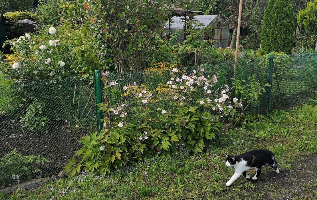 Rodzinne Ogrody Działkowe stały się łakomym kąskiem. Obecnie w Wielkopolsce na sprzedaż wystawionych jest ich niewiele. Niektóre jednak bardzo atrakcyjne
