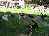 Gromadka psów spod Łasku szuka nowych domów. Którego przygarniecie?