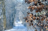 Śnieżyce na zachodzie kraju, w Łodzi tylko przelotnie poprószy