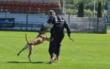 Tropienie, posłuszeństwo, obrona - w Ostrowcu trwają mistrzostwa Polski psów (ZDJĘCIA)