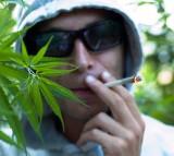 Plantacja marihuany w Skoroszycach pod Nysą. Uprawiali konopie na dużą skalę i jeszcze kradli prąd
