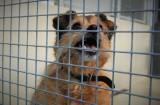 W koszalińskim Leśnym Zakątku czekają na nowy dom. Kolejne psy do adopcji [ZDJĘCIA]