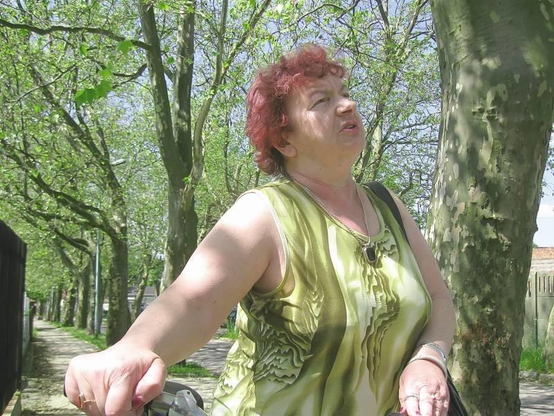 - Te platany najwyraźniej są chore, trzeba je leczyć, zanim zupełnie wyschną - mówi Renata Ochryniuk z Żar