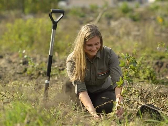 - Nowe drzewa sadzone są z myślą o pszczołach i w celu zwiększania bioróżnorodności. Na terenie nadleśnictw zielonogórskiej dyrekcji Lasów Państwowych, do odnowienia, leśnicy przeznaczyli powierzchnię o areale 3217 ha, a ok. 90 ha powierzchni zielonogórskich lasów zostanie odnowionych naturalnie - mówi Ewelina Fabiańczyk z RDLP w Zielonej Górze (na zdjęciu podczas sadzenia drzew).