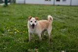 Te psy czekają na adopcję. Szukasz przyjaciela? Możesz adoptować! [GALERIA]